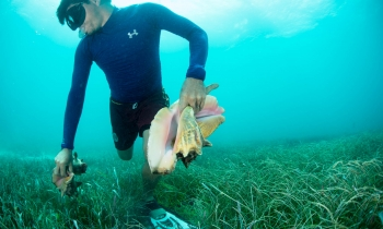 BELIZE_CAYE_CAULKER_OUTER_REEF_CONCH_0916_332
