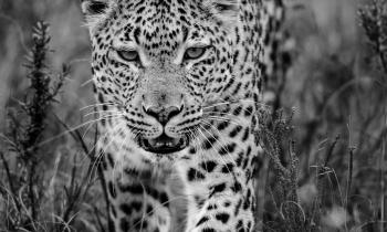 SHAMWARI_AFRICA_DO_SUL_0109-00127