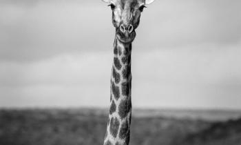 SHAMWARI_AFRICA_DO_SUL_0109-00686