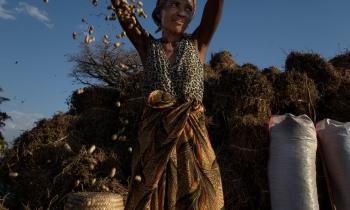 Processamento de uma pequena colheita de amendoim, Kirindy, Madagáscar, 2017. (26mm) - Zoom 24-70/2.8