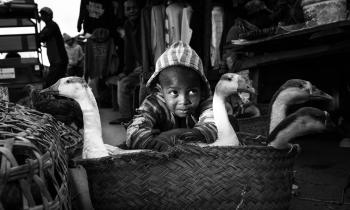 Menino com os gansos da banca de sua avó na tradicional feira de Moramanga, Madagascar, 2018. (35mm). Fixa 35/1.4